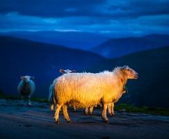 reise-fotografie-norwegen-20-jpg