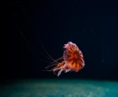 fotos-divers-8-jpg